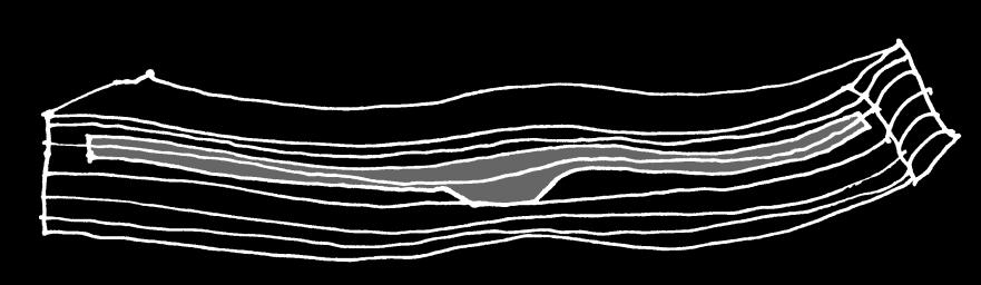 In een stuk stam kan de buitenste groeilaag de rug vormen. Of een lager gelegen groeilaag.